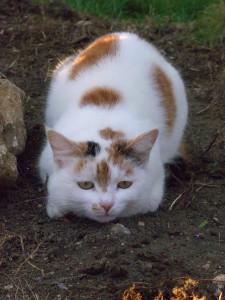 unsere kleine Yildiz ist leider im Mai 2005 gestorben